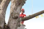 Jakie gałęzie kwalifikują się doprzycięcia?