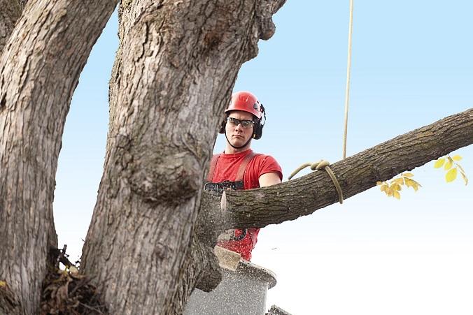 przycinanie gałęzi